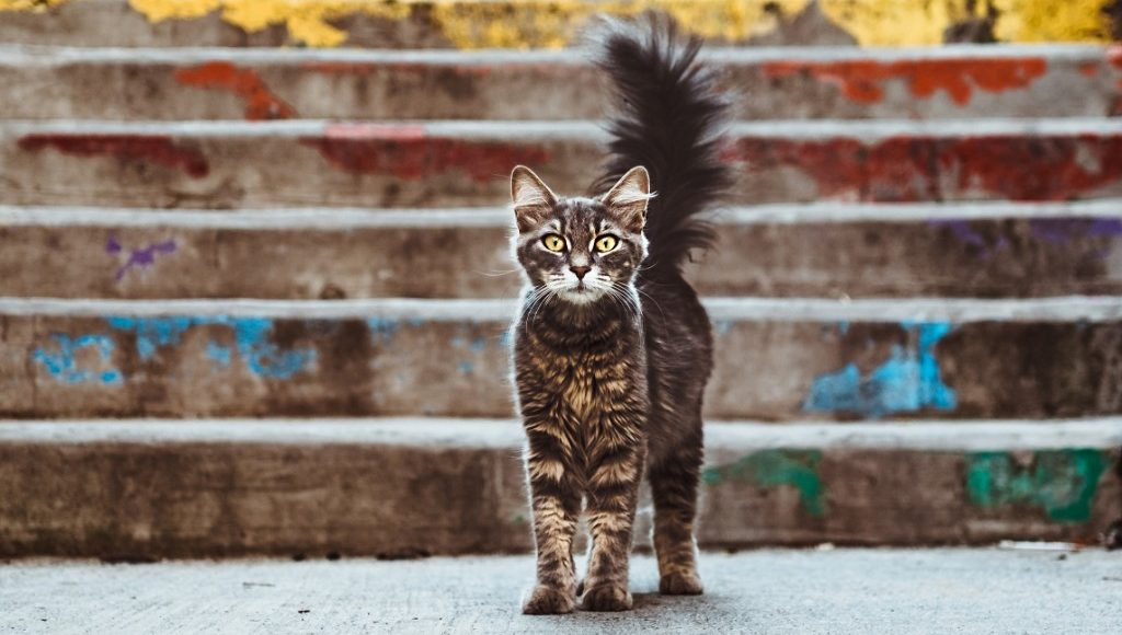 A stray cat looking at the camera while keeping its tail up, with stairs in the background.